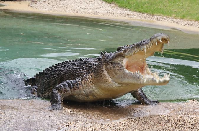 Crocodile - swamp safari