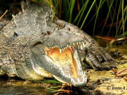 Swamp Safari - Falmouth